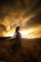 Among the fields of gold by Stridsberg