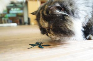 cat and dragonfly by Diastola