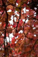 Autumn leaves 3 by serasfan