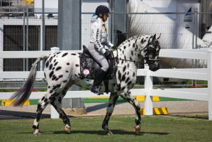STOCK - Equitana 2013-53 by fillyrox