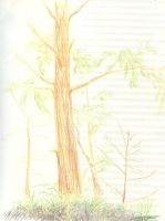 wanakena colored pencil trees by Underbase