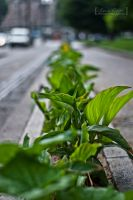 Street of leafs by MetallerLucy