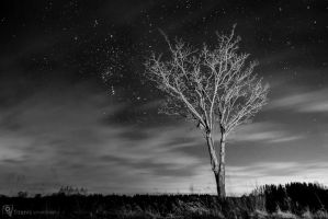 Tree in the night by EqualFx