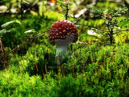 Fly amanita by 75ronin