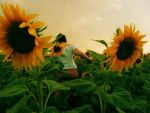 In the still of the Sunflowers by Chinuk