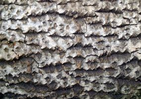 Stock Texture - Rough Bark by rockgem