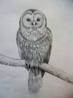 Owl Sketch by death-in-the-orchard