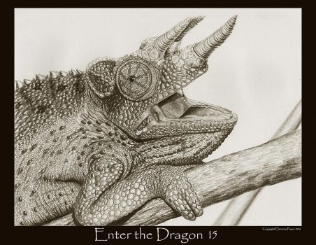 Enter the Dragon15 by Ellygator