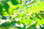 Brillian Summer Leaves by Crusher-C