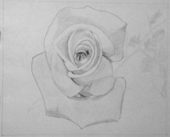 WIP3:  Rose in Graphite Pencil 11/30/2012 by ChrisDutton