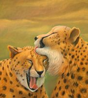 Cheetahs caress each other by AldemButcher