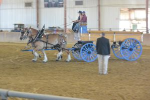 Topsfield Fair, Horse Handler Competition 14 by Miss-Tbones