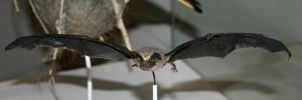 Denver Museum Bat 298 by Falln-Stock