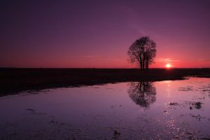 Sunset with trees by SzymonMic