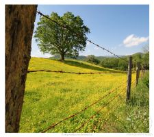 Cold Branch Fence by kurtywompus