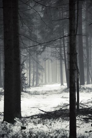 Winter Forest by ~ArtOfFragility