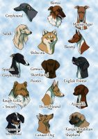 My favorite dog breeds by t1sk1jukka