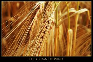 The Groan Of Wind by ChapterXII
