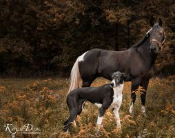Horse and Great Dane 2. by KenzyDionPhotography