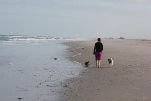 walking dogs on the beach by taevans