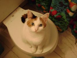 Potty Cat by Naez