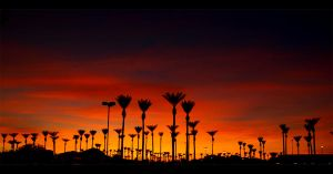 Sunset Palms by Swanee3