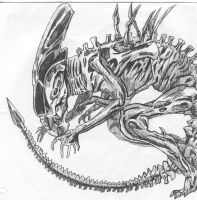 Xenomorph by ShadowBaen