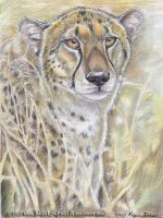 Cheetah portrait by BlackMysticA