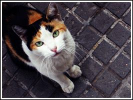 Street Cat 4 by velsapix