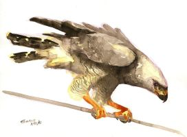 Watercolor hawk by Alessio-Scalerandi