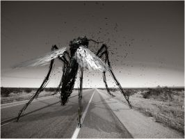 mosquito.highway by Matt-Mills