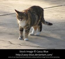 Cat Stock 4 by Cassy-Blue