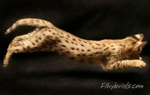 In air cat by F1hybrids