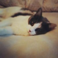 Checkers the Rescue Cat by aimili24