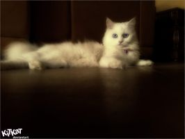 My cat by MUSEF