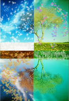 Tree in Four Seasons by c-h-o-c-o-l-a-t-e