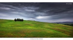 Storm on the Cypress by Marcello-Paoli