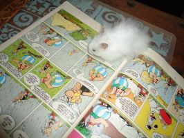 Hamster Reading Asterix by munchengirl