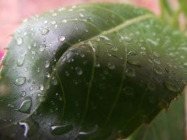 Water Droplets by ChloePudding