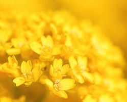 Buttery Cluster by switch-sgfx