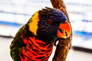 Showing His Colors by praline815