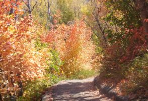 Autumn Path by XxSilverOwl13xX