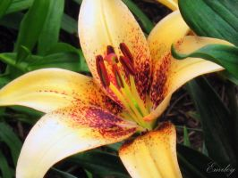 Freckles on Lilies by Emoley