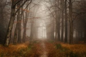 leaves slowly, quietly by Oer-Wout