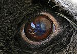the eye of the rabbit by Mittelfranke