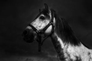 Horse with no name by Chris-Lamprianidis