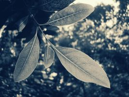 Leaves by praveen3d