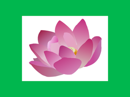 Pink Lotus Vector by Wistfulwish