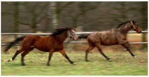 the race is on by paula2206-photo