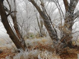 Wrapped in Fog and Ice by SharPhotography